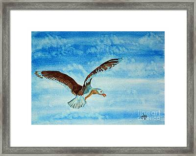 Seagull In Flight Framed Print by Terri Mills