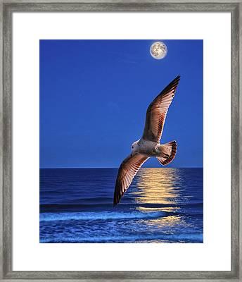 Seagull In The Moonlight Framed Print