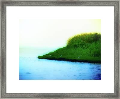 Seagull Island Framed Print by Bill Cannon