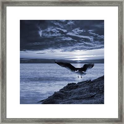 Seagull Framed Print by Jaroslaw Grudzinski