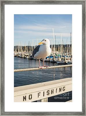 Seagull Framed Print by Juli Scalzi