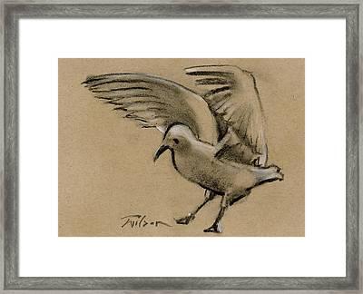 Seagull Landing Framed Print by Ron Wilson