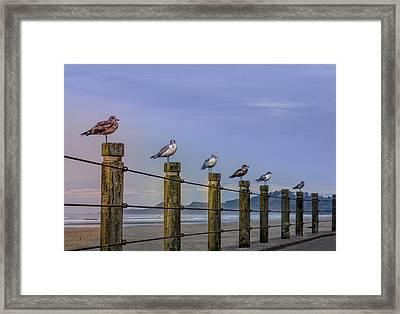 Seagull Lineup Framed Print