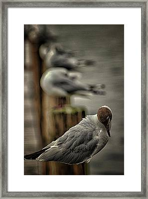 Seagull Lookout Framed Print by Martin Newman