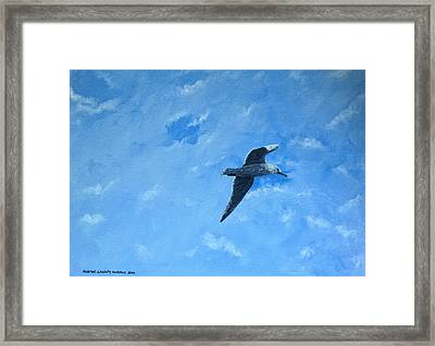 Seagull Framed Print by Martine Murphy
