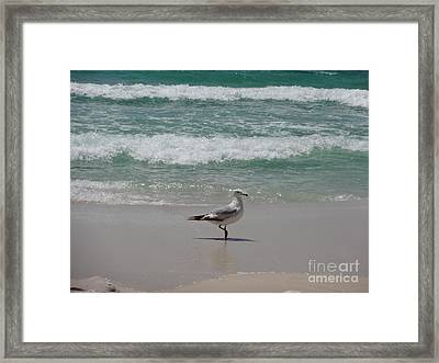 Seagull Framed Print by Megan Cohen