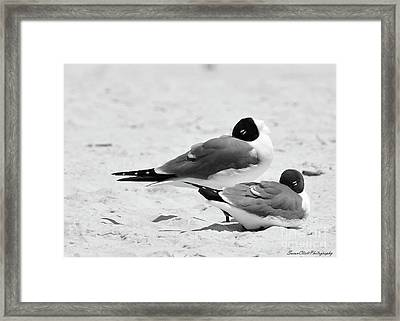 Seagull Nap Time Framed Print