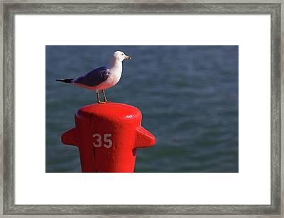 Seagull Number 35 Framed Print