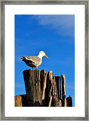 Seagull On A Dock 2 Framed Print by Andrew Dinh