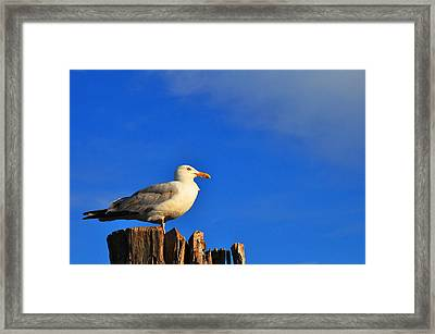 Seagull On A Dock Framed Print by Andrew Dinh