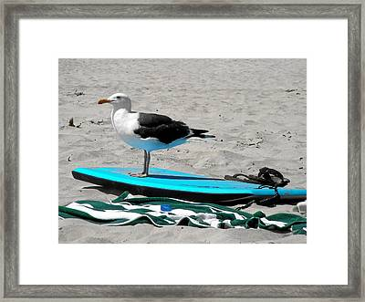 Seagull On A Surfboard Framed Print
