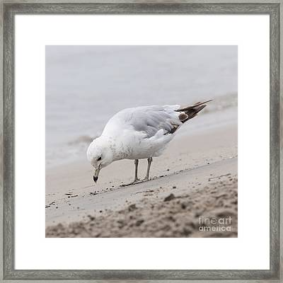 Seagull On Foggy Beach Framed Print by Elena Elisseeva