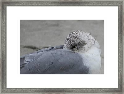 Seagull On The Beach Framed Print