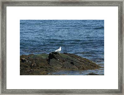 Framed Print featuring the digital art Seagull On The Rocks by Barbara S Nickerson