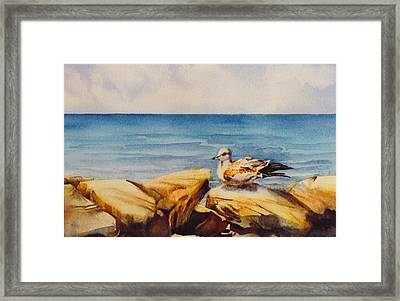 Seagull-on-the-rocks Framed Print by Nancy Newman