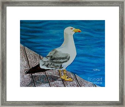 Seagull On The Shore - Gaviota En La Costa Framed Print by Melvin Rodriguez