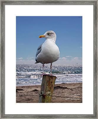 Seagull On The Shoreline Framed Print
