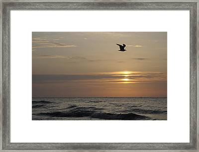 Seagull Over Atlantic Ocean At Sunrise Framed Print by Darrell Young