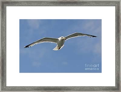 Seagull Patrol Framed Print by Steev Stamford