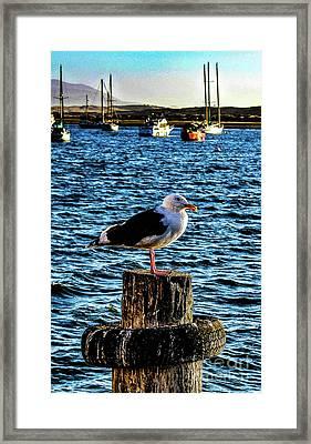 Seagull Perch Framed Print
