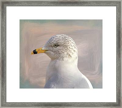 Seagull Portrait Framed Print by Donna Kennedy
