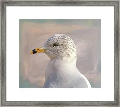 Seagull Portrait Framed Print