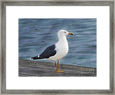 Seagull Portrait Framed Print by Sue Melvin