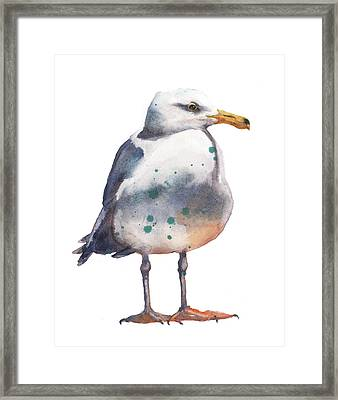 Seagull Print Framed Print by Alison Fennell