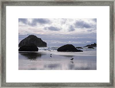 Seagull Reflections Framed Print