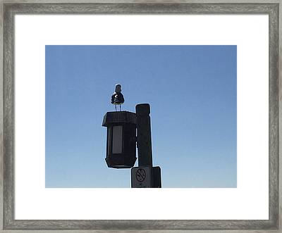 Seagull Sentry Framed Print by Russell Keating