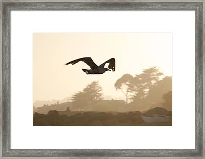 Seagull Sihlouette Framed Print by Marilyn Hunt