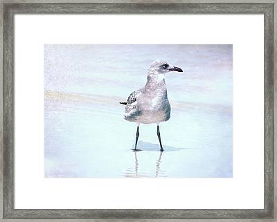 Seagull Stance Framed Print by JAMART Photography