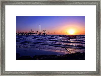 Seagull Sunrise Framed Print