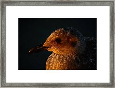 Framed Print featuring the photograph Seagull Sunrise by Tikvah's Hope