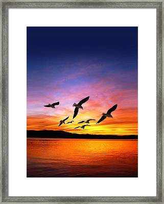 Seagull Sunset   Framed Print by Gravityx Designs