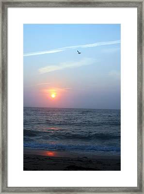 Seagull Sunset Framed Print by Todd Breitling