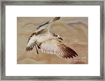 Seagull Swirl Framed Print by Deborah Benoit