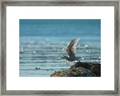 Seagull Takeoff Framed Print