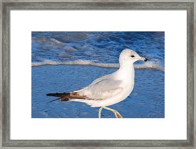Seagull Walks The Surfline Framed Print by Bill Driscoll