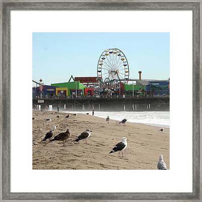 Seagulls And Ferris Wheel Framed Print