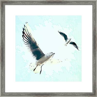 Seagulls Framed Print by Angela Doelling AD DESIGN Photo and PhotoArt