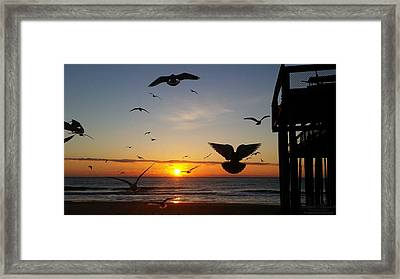 Seagulls At Sunrise Framed Print