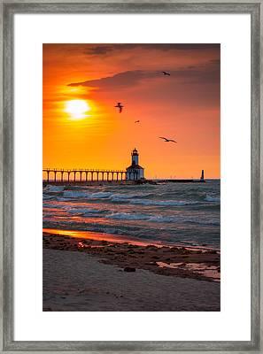 Seagulls At Sunset Framed Print by Jackie Novak