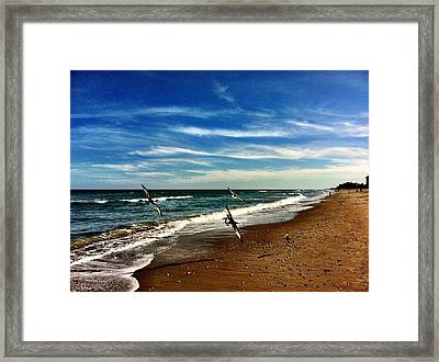 Seagulls At The Beach Framed Print