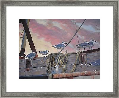 Seagull's Delight Framed Print by Christopher Reid