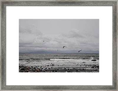 Seagulls Flight Path Framed Print