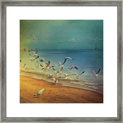 Seagulls Flying Framed Print