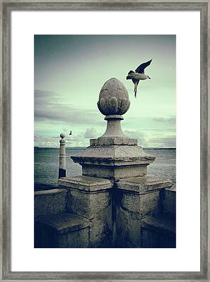 Framed Print featuring the photograph Seagulls In Columns Dock by Carlos Caetano