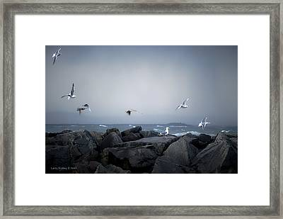 Framed Print featuring the photograph Seagulls In Flight by Larry Keahey