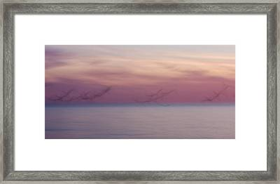 Seagulls In Motion Framed Print by Adam Romanowicz
